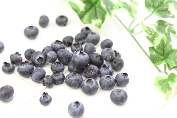 ブルーベリーの栽培をする時の5つのチェックポイント