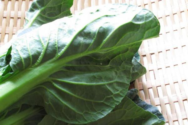 小松菜を栽培する時の5つのポイント