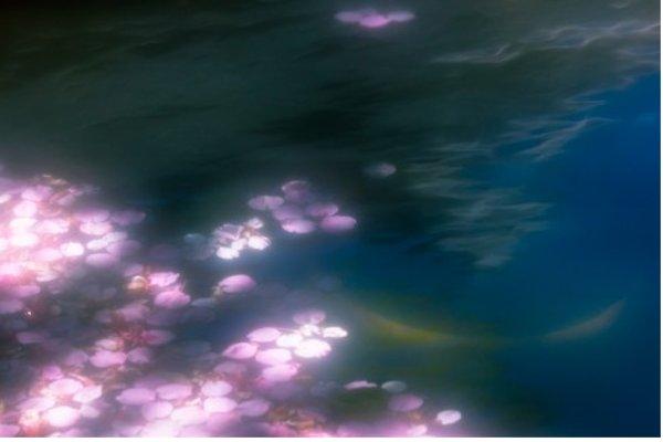 桜の花びらのイラストを入手する5つの方法