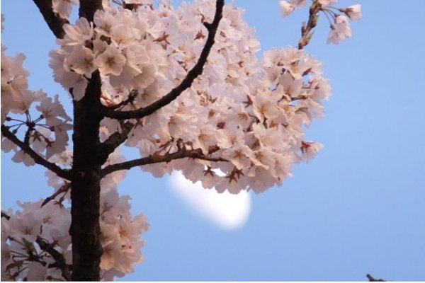 日本平桜マラソンについての5つの特徴