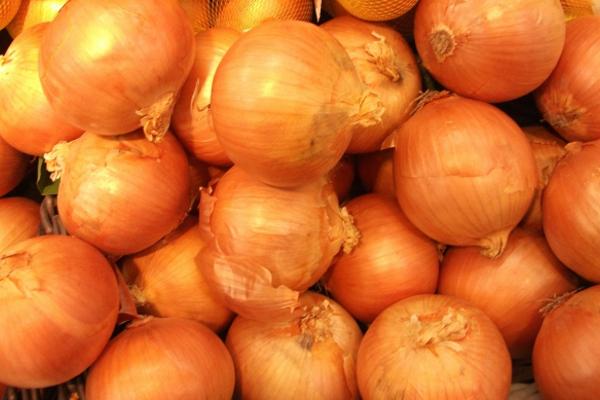 玉ねぎの栽培をする時に知っておきたい5つのポイント