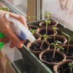 トマトの水耕栽培で知っておきたい5つのこと