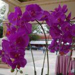 胡蝶蘭の育て方で知っておきたい5つのポイント
