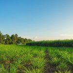 露地栽培をすることで得られる5つのメリット