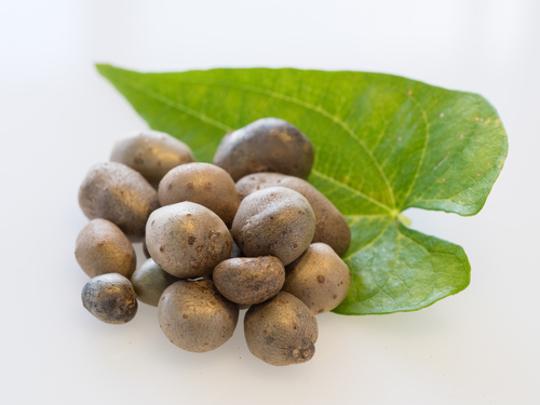 自然薯の栽培にはこの5つが重要!
